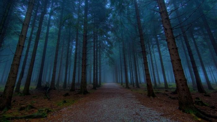 dndDark-Woods