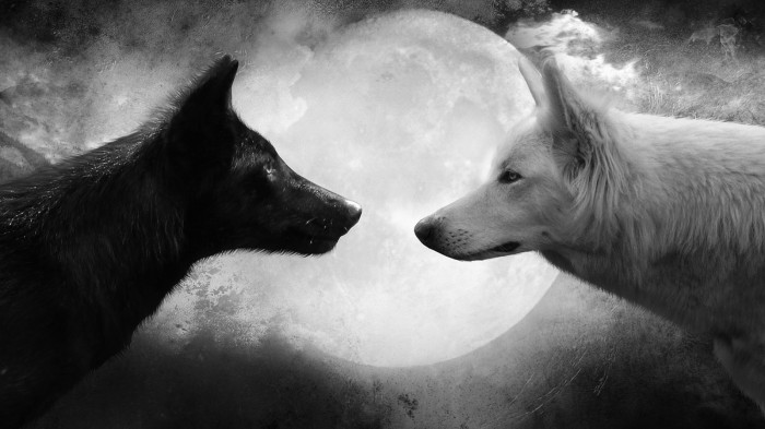 black-and-white-wolf