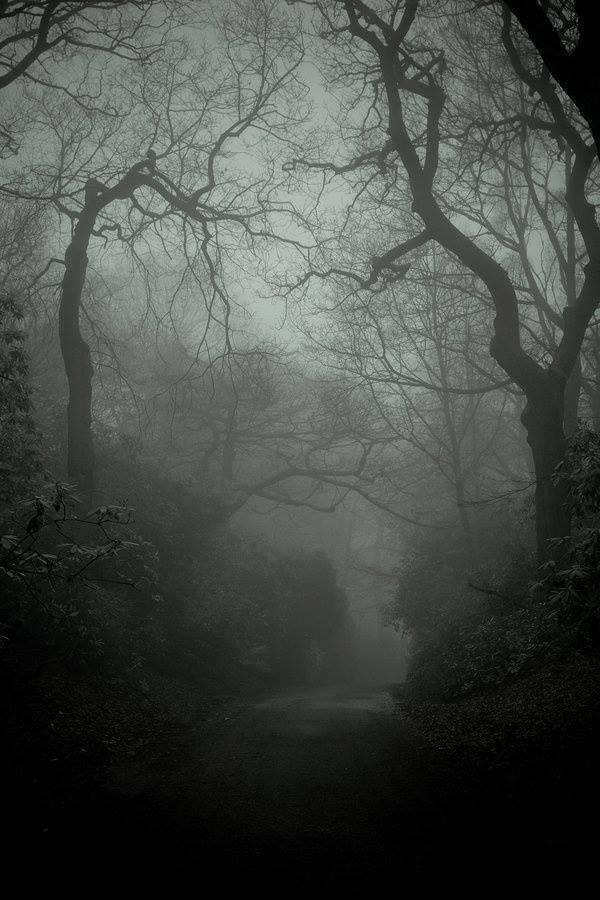 dnddarkforest