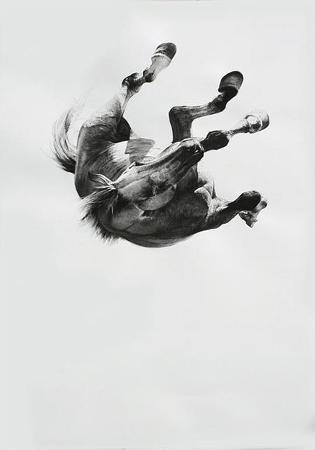 falling_horse